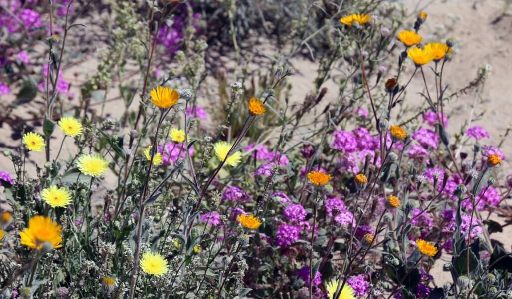 Des fleurs rarement observées