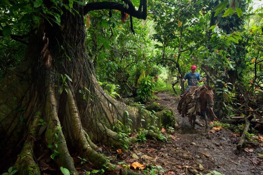 La forêt tropicale est la mère nourricière des Amérindiens