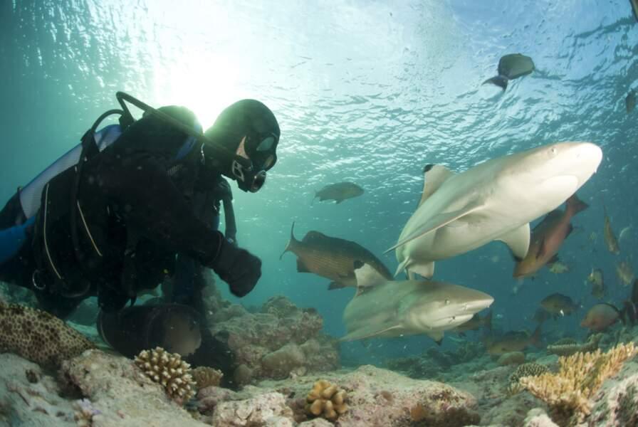 Plongée avec des requins à pointes noires