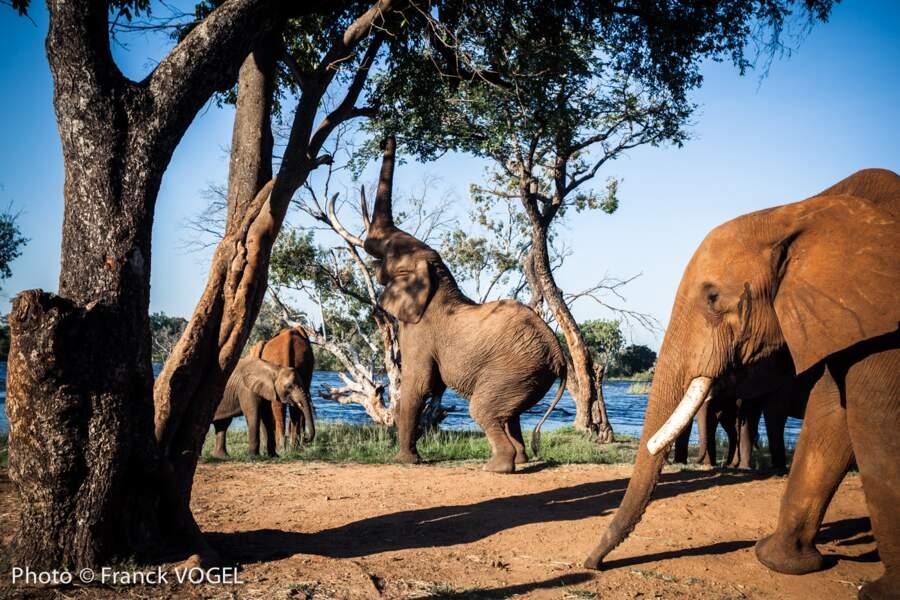 Une faune incroyablement préservée