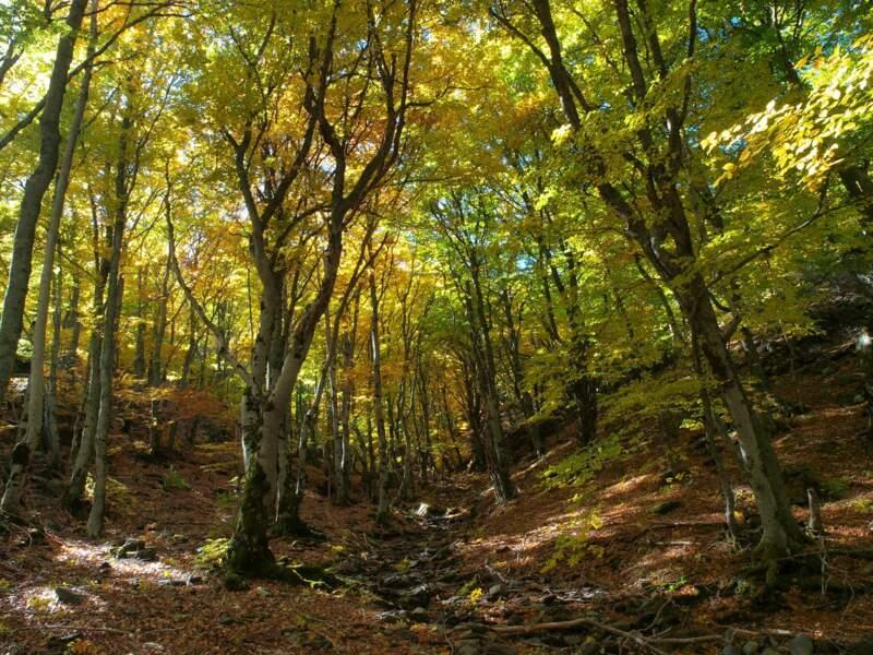 Forêts primaires de hêtres des Carpates et d'autres régions d'Europe