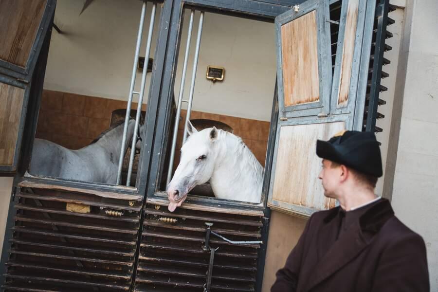 Mon royaume pour un cheval!