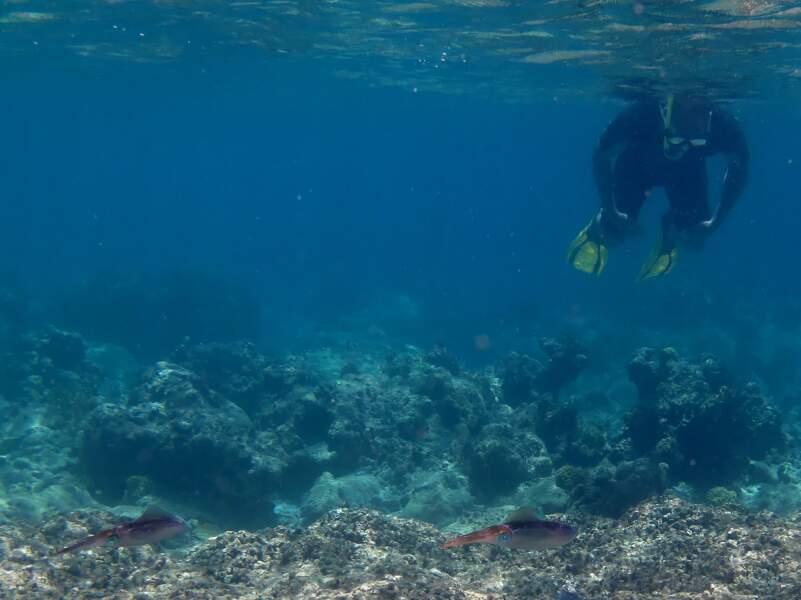 De superbes fonds marins à observer