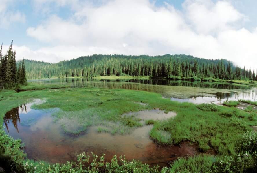 Le parc national de Mount Rainier