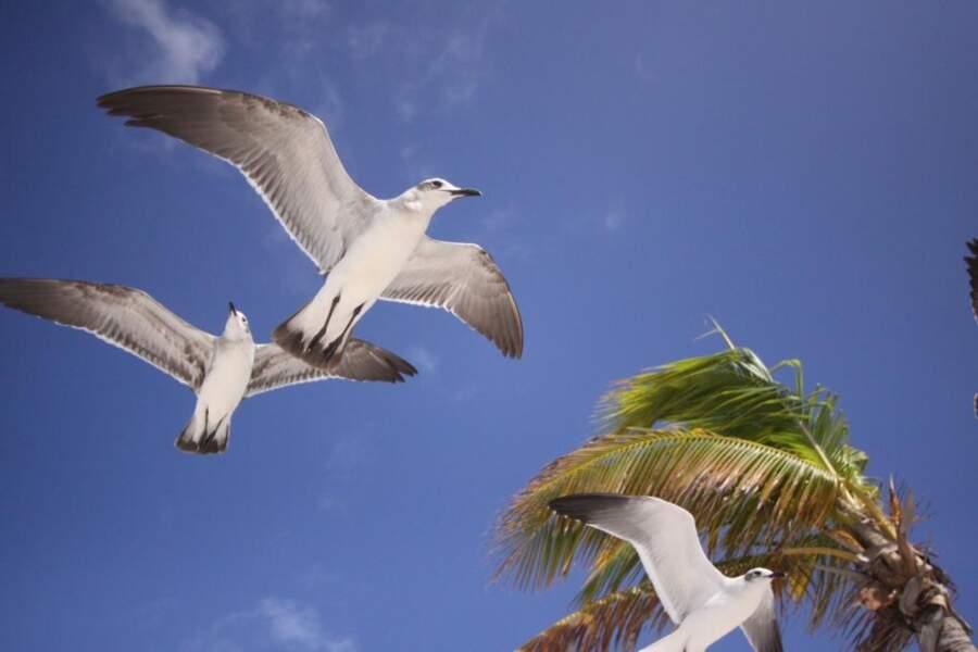 Photo prise au Mexique par Frederic Schrobiltgen