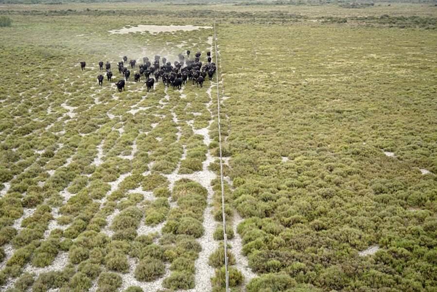 Le domaine de la Tour du Valat, une Réserve Naturelle Régionale