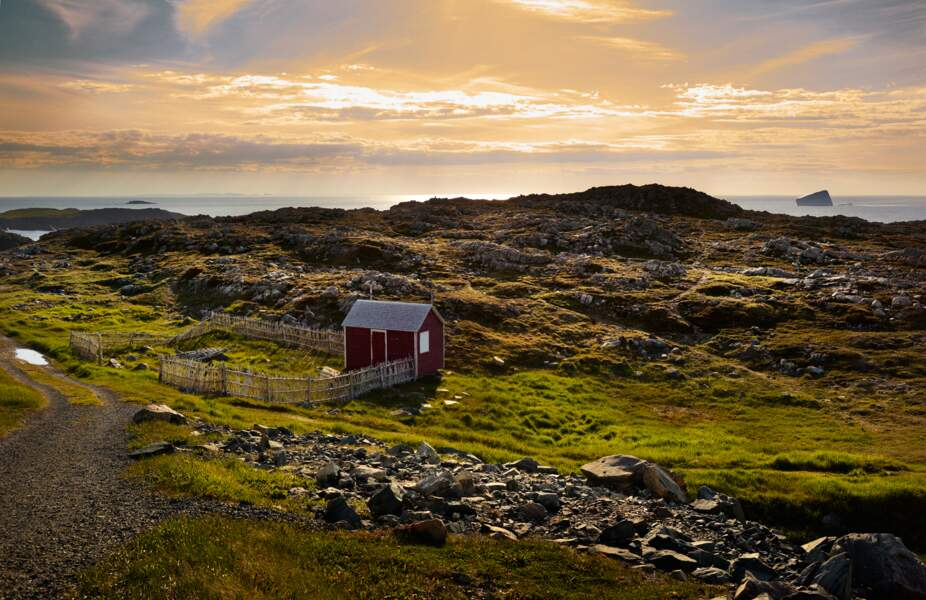 Un an de migration, du Groenland à Terre-Neuve