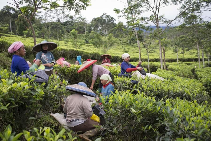 Près du village de Citeko Panjang, petit déjeuner avant de commencer la récolte des feuilles de thé