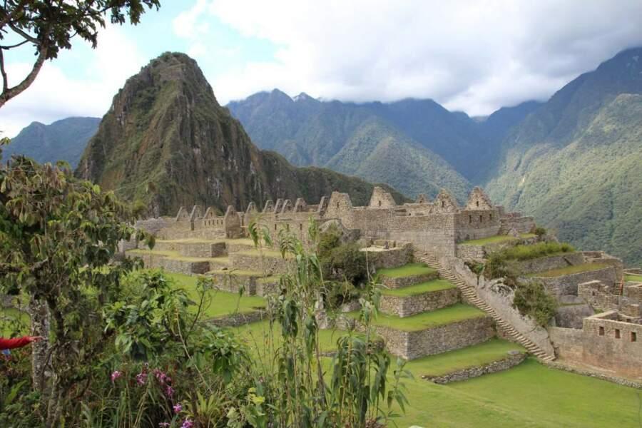 Les orchidées du Machu Picchu