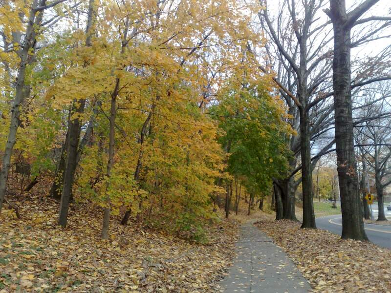 Forest Park, Queens