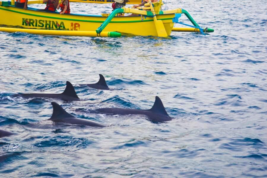 Les dauphins de Lovina Beach