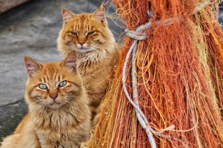 """Au sud du Japon, sur l'île d'Aoshima, dite """"l'île aux chats"""", il y a plus de félins que d'hommes"""