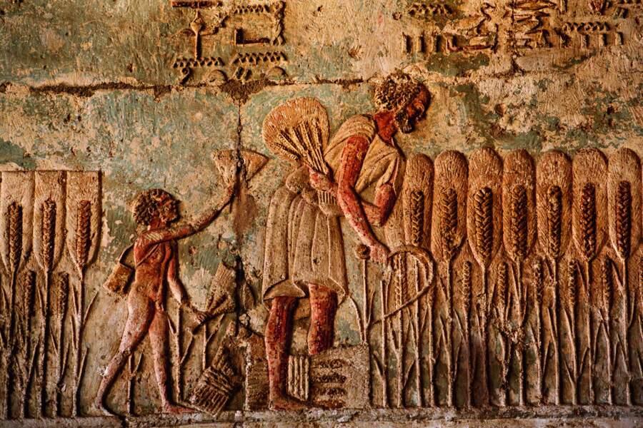 Le tombeau du prêtre Pétosiris abrite des scènes étonnamment réalistes