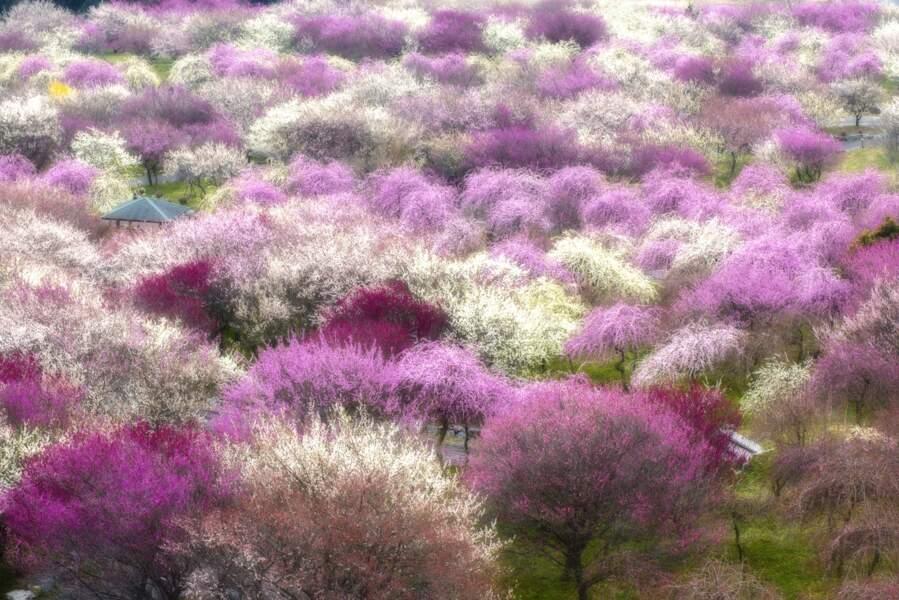 Au Japon, un printemps impressionniste