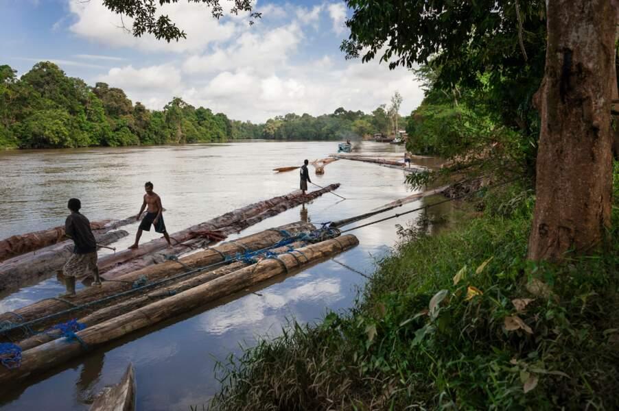 Le bois dévale les fleuves vers la mer de Java