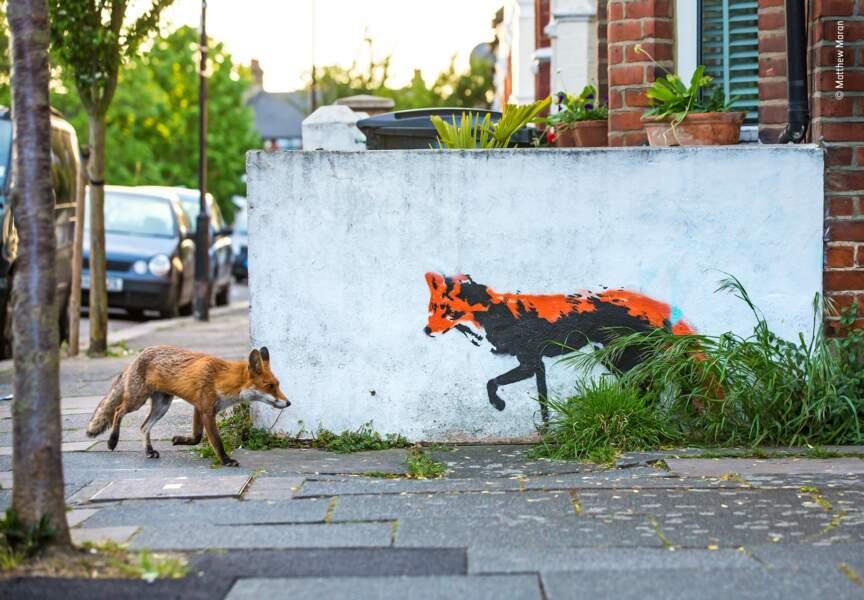 Un renard rencontre un renard
