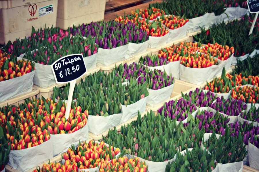 Flâner au marché aux fleurs et à l'Albert Cuyp Markt