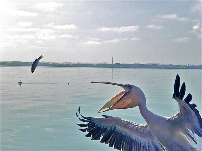 Photo prise dans la Walvis Bay (Namibie), par almutcarry