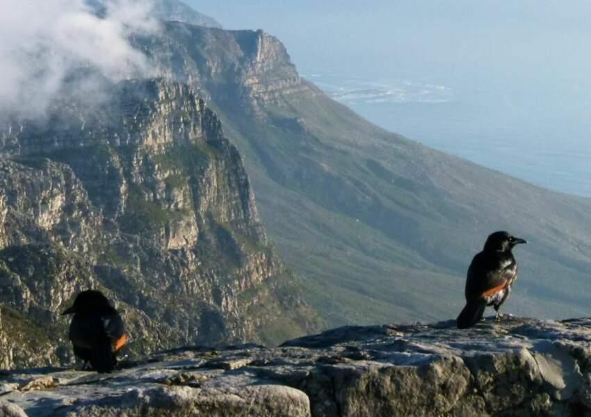 Photo prise dans la région du Cap (Afrique du Sud) par le GEOnaute : mapa