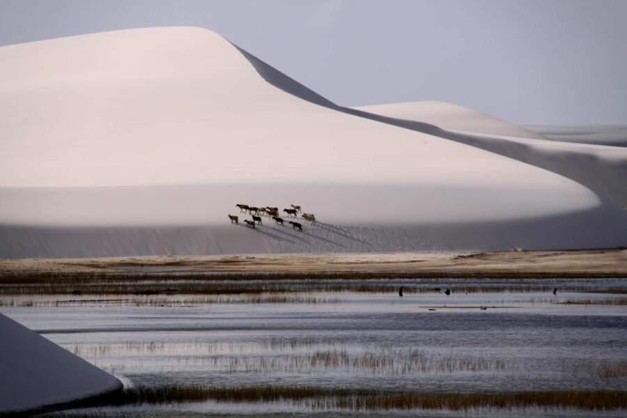 Dunes de Lençóis Maranhenses, au Brésil, par le GEOnaute ludo