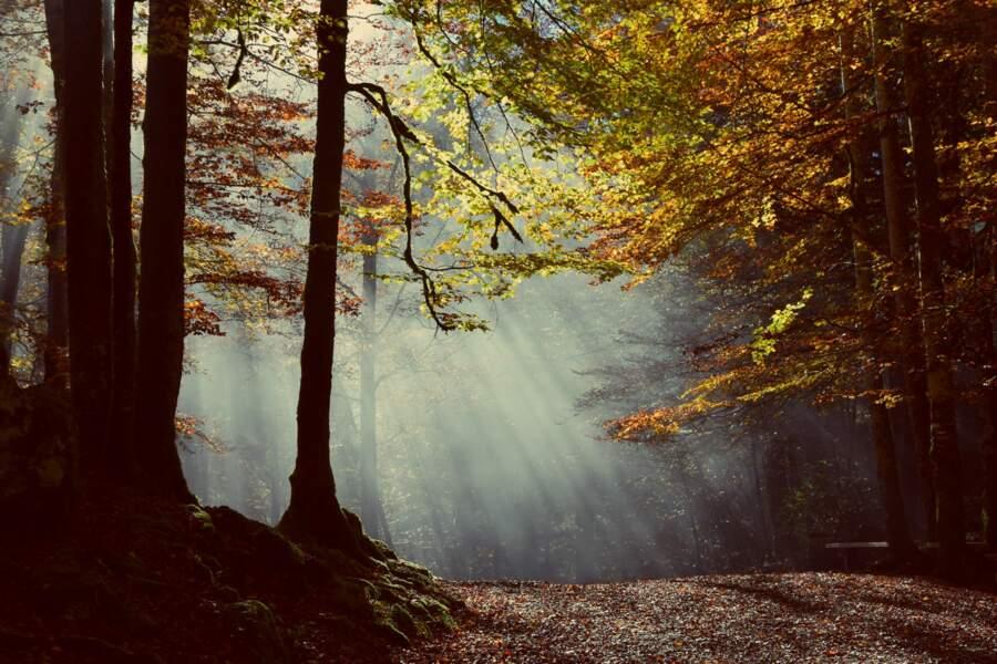 En forêt dans le Doubs
