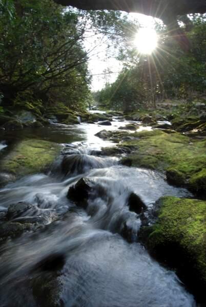 Tollymore Forest Castle, en Irlande du Nord : les forêts du Nord