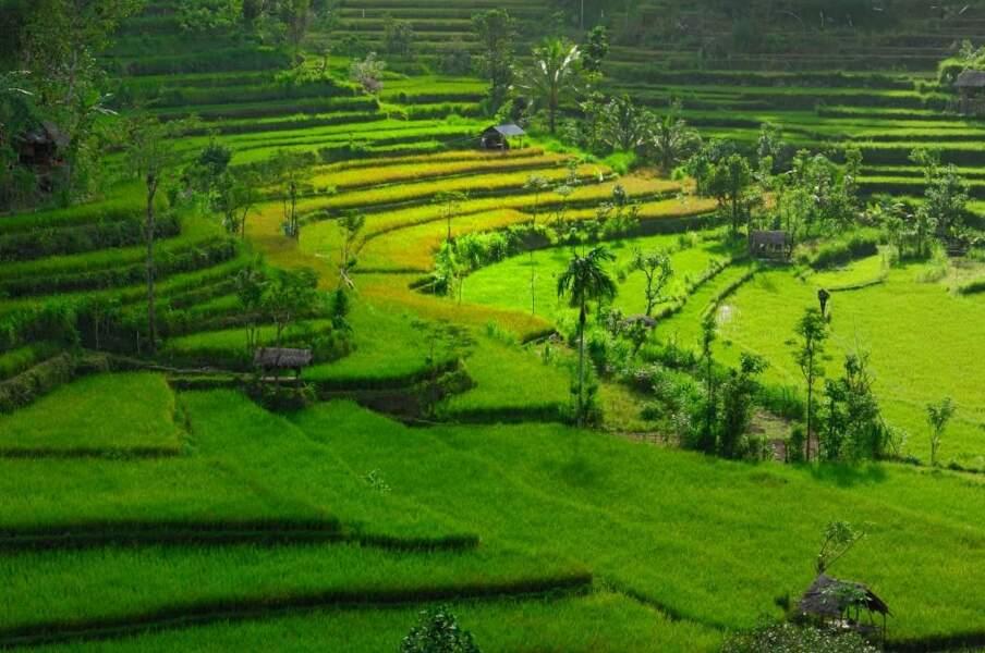 Rizières à Bali, par le GEOnaute Morpheus