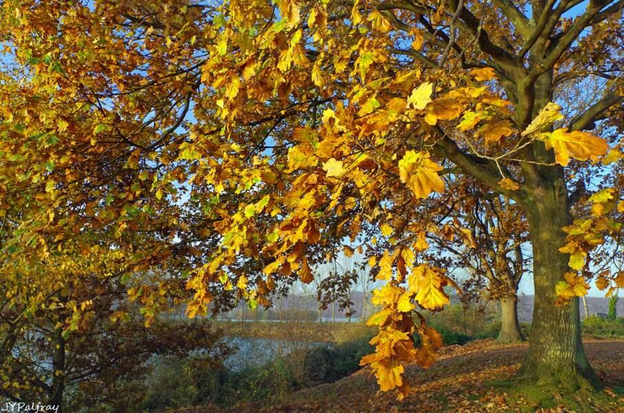 Lumières d'automne à Jumièges, en Seine-Maritime