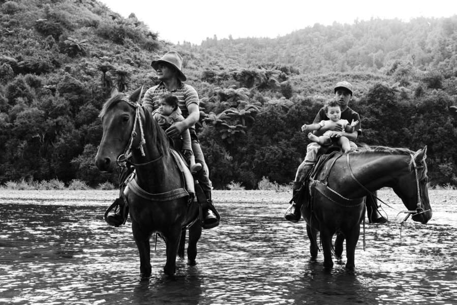 Les maoris : 79 tribus traditionnelles (iwi) divisées en sous-tribus (hapu) et familles (whanau)