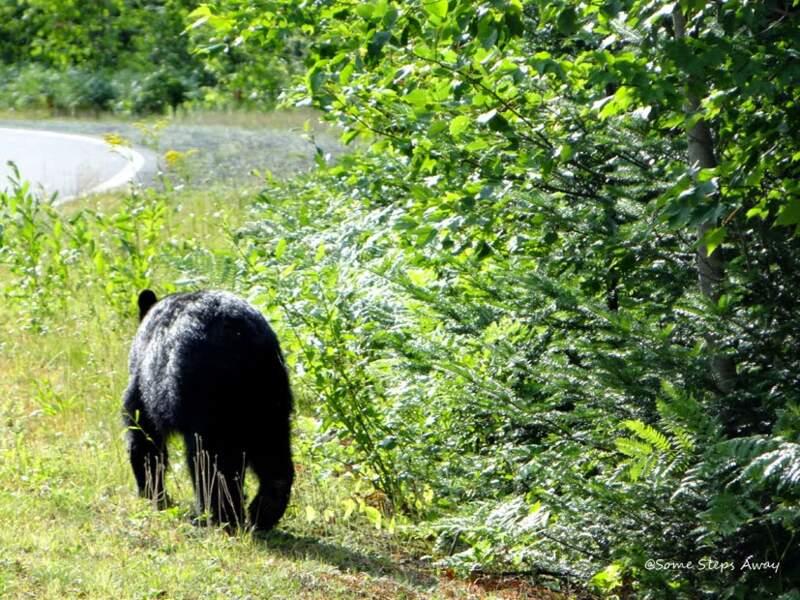 Canada - Canot, rando, et rencontre avec l'ours noir au Parc de la Mauricie