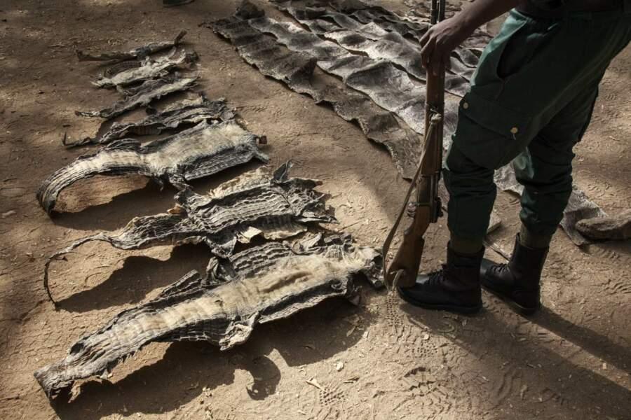 Peaux de crocodiles