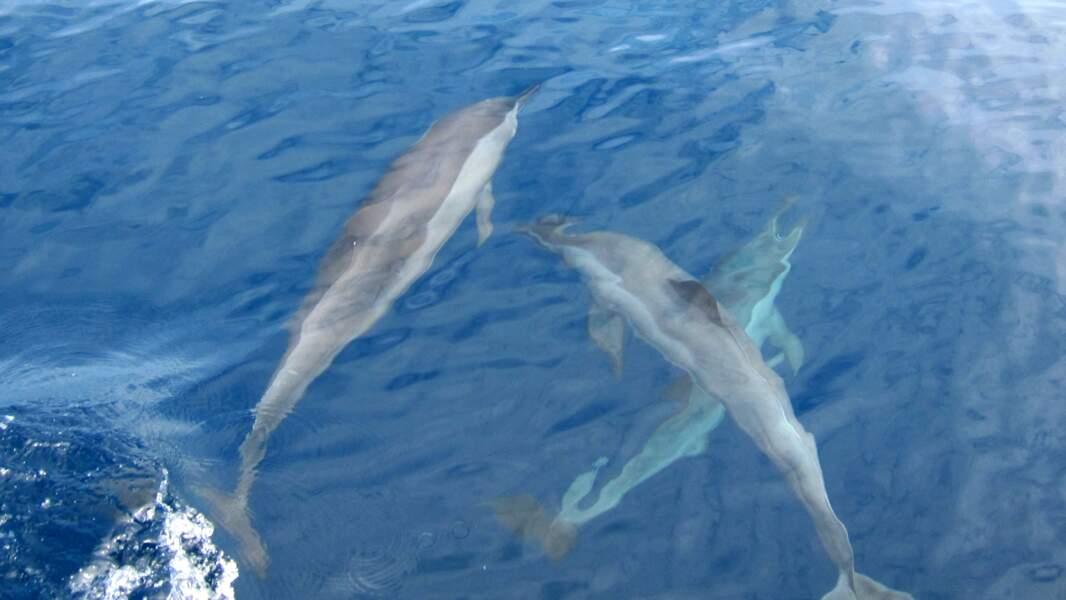 Mirissa et ses animaux marins