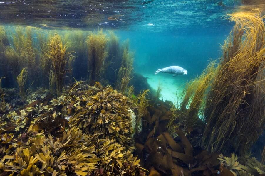 Au milieu des algues