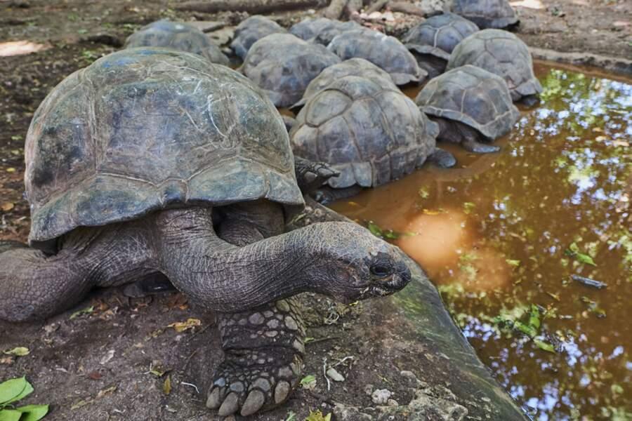 L'île aux tortues