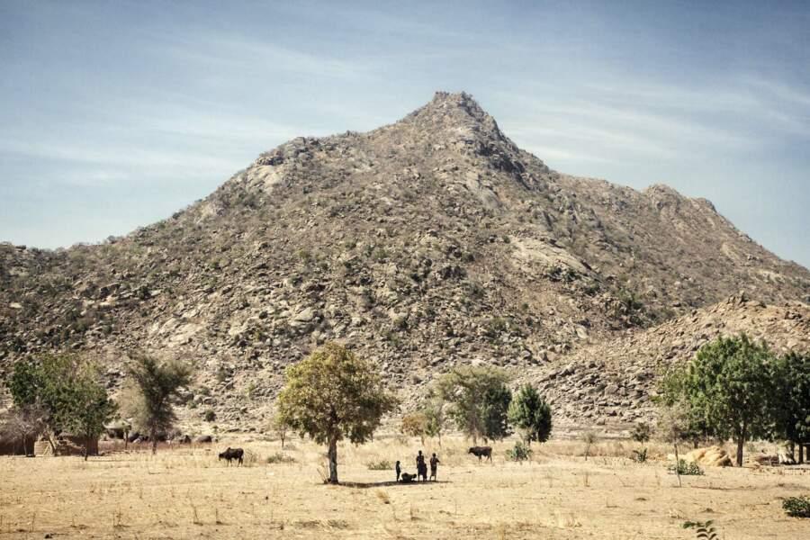 Waza, un parc camerounais sous la menace terroriste