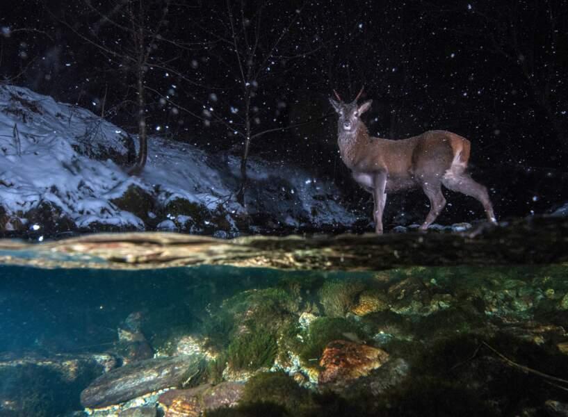 Surpris dans la nuit - Vegard Lødøen (Norvège), finaliste dans la catégorie «animaux dans leur milieu naturel»