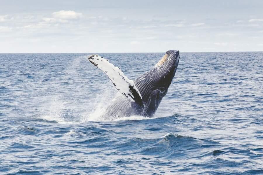 Au paradis des baleines