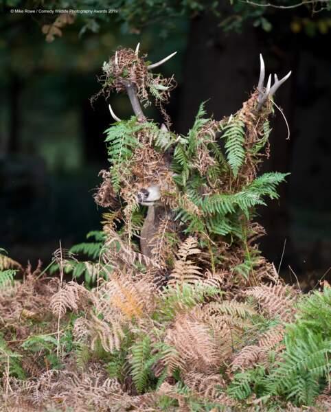 Cerf élaphe, Richmond Park, Londres, Royaume-Uni (félicitations du jury)