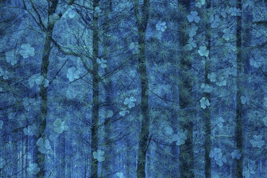 Le bonheur pousse dans les arbres