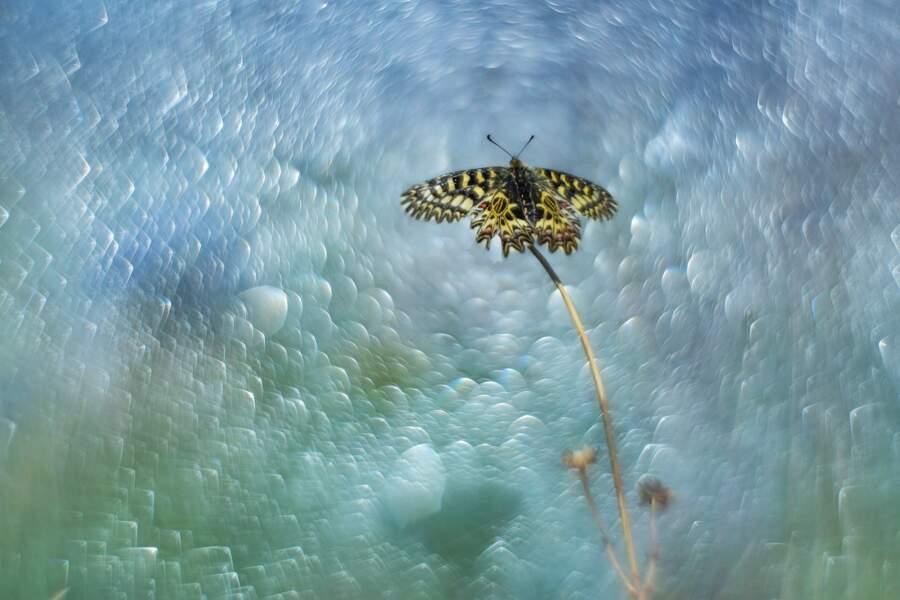 Papillon Diane par Carole Reboul