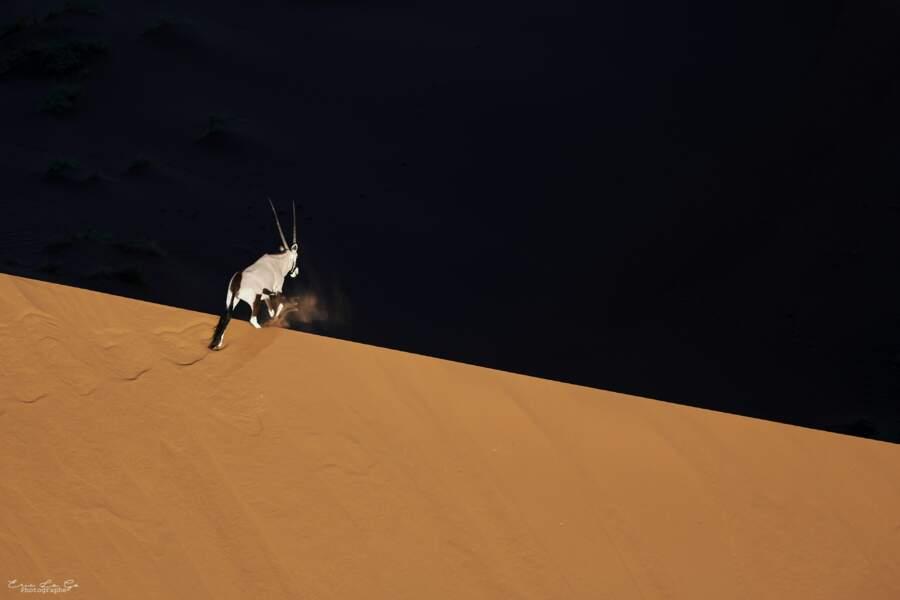Oryx par Eric le Go