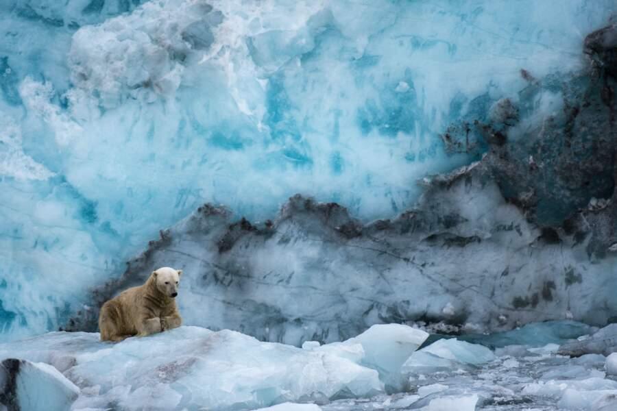 Ours polaire par Jean-Marie Seveno