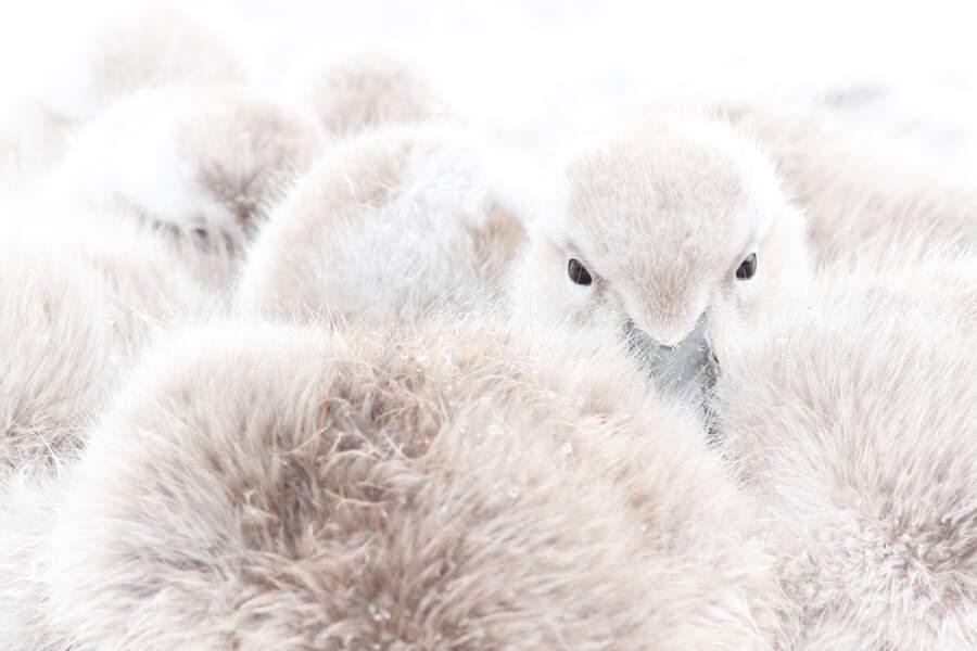 Doux plumage