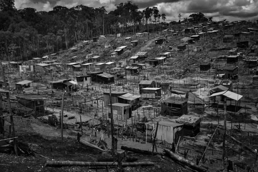 Jungle des favelas