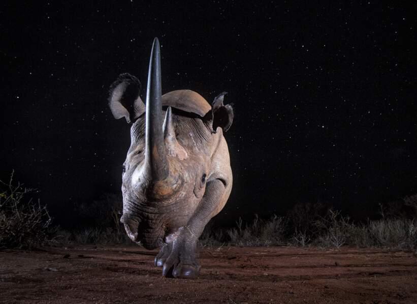 En tête à tête avec un rhino
