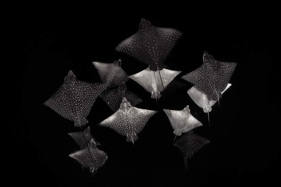 Constellation de raies