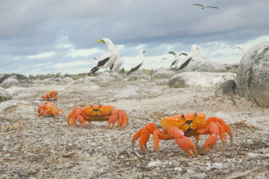 L'atoll de Clipperton, cette poussière de France en plein Pacifique Nord