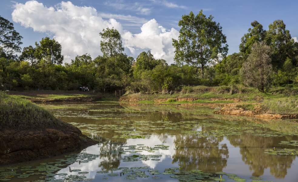 La forêt de Karura à Nairobi au Kenya