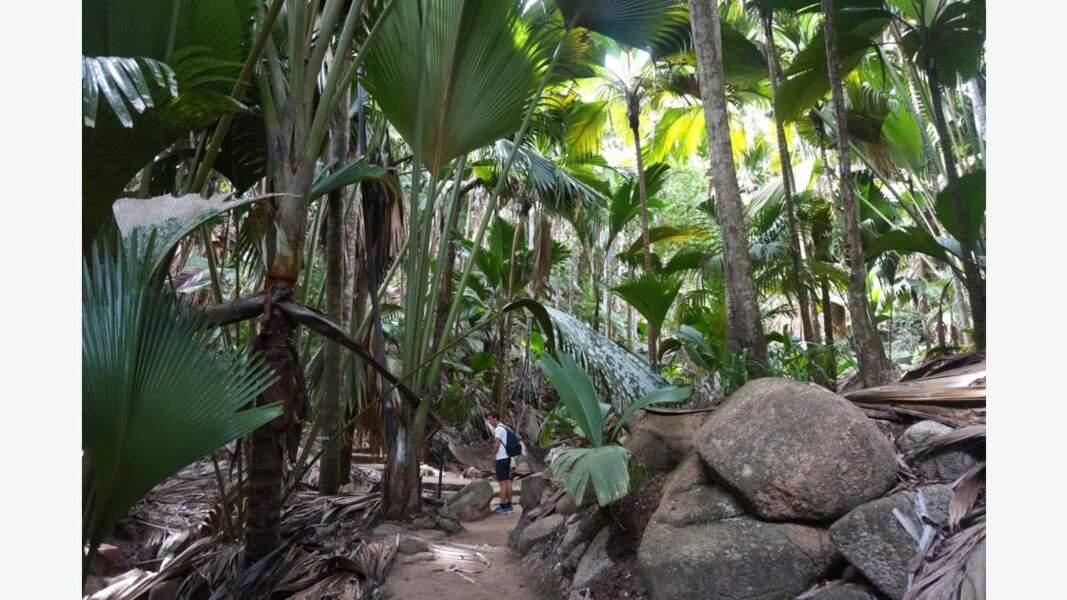 Vallée de Mai, île de Praslin