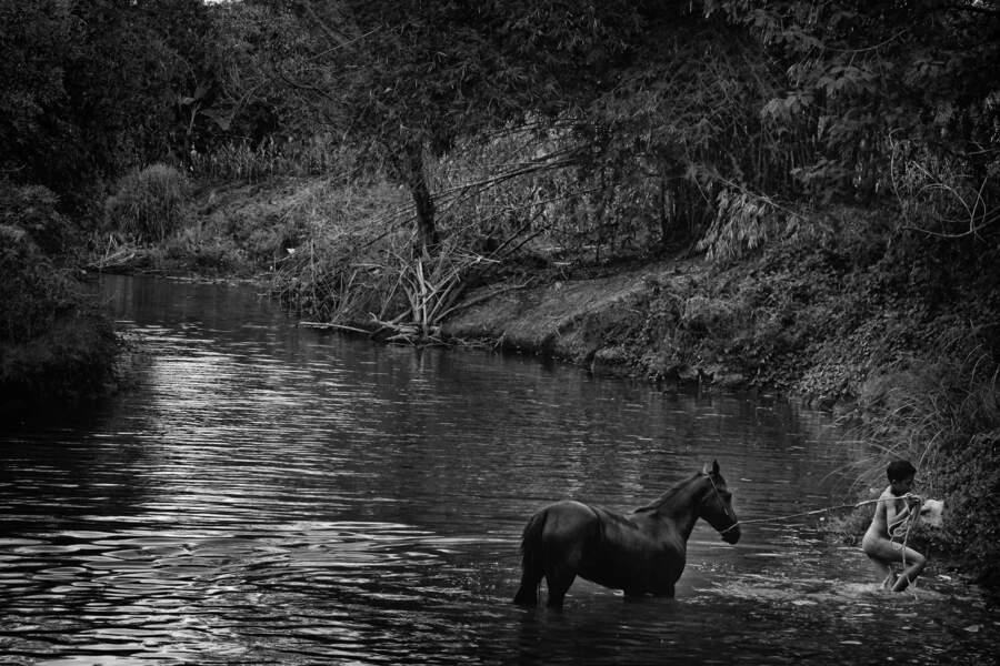 Un cheval rare